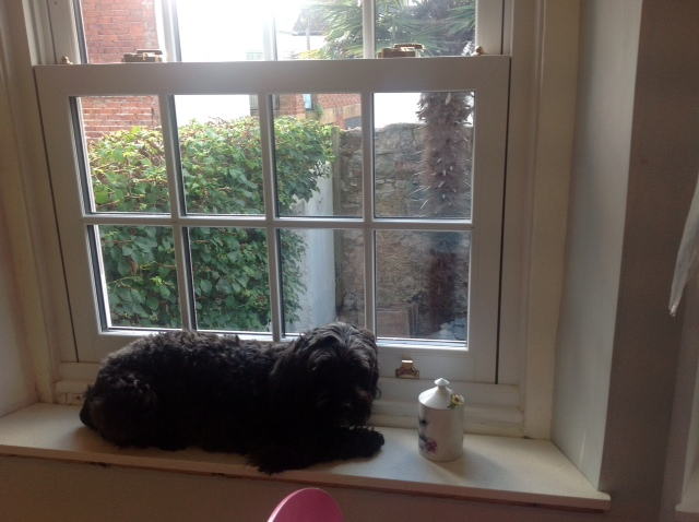 Biff%20on%20windowsill.JPG