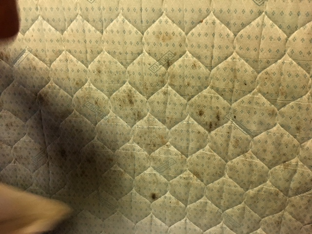 mould%20spots%20on%20mattress.JPG